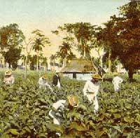 Cuba Heritage Org